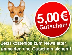 Schecker Newsletter