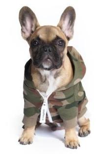 OnePiece für Hunde