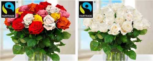 123 Blumenversand Rosen Fairtrade